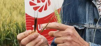 Des nouvelles variétés de blé pleines de promesses !