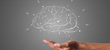 Les études cérébrales au cœur de la conception pédagogique
